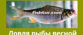Ловля рыбы весной