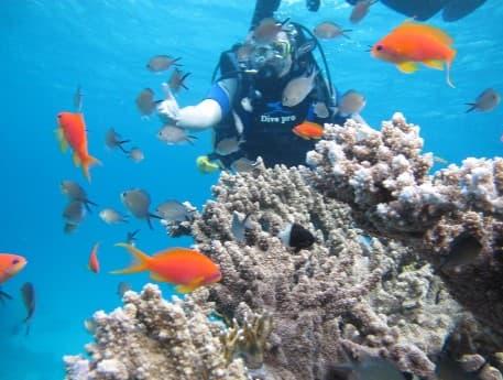 Кораллы на коралловом рифе