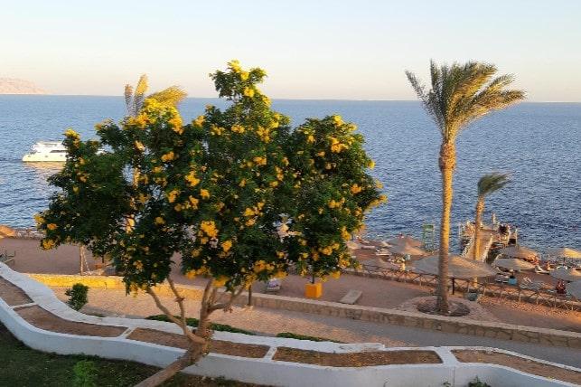 Coral Beach Resort Tiran отзывы